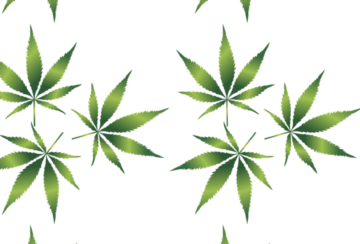 cannabis-1032131_1280